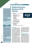 2008 - Identificación de bacterias filamentosas en EDAR insdustriales