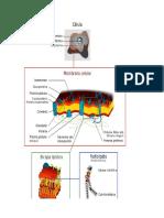 Guía 2 Membrana Celular