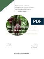 cultivo de cacao actividad II