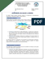 Componente Celular de La Dermis - Michelle Hernández- Grupo 2