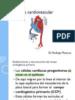 Sistema cardiovascular- Primera parte-Embriología 2021
