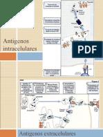 Antigenos intracelulares