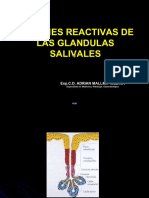 GLANDULAS-SALIVALES