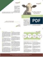 Bungalo Newsletter Fnl