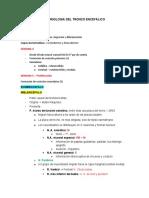 Embriologia Del Tronco Encefálico