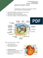 1 Anatomia do globo ocular - Oftalmo