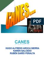 Los Canes