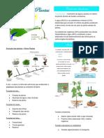 Resumo 8- Transporte Nas Plantas