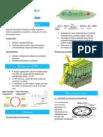 Resumo 7- Fotossíntese e Quimiossíntese