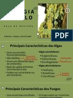 7° Ciclo -  Revisão Agas e  Fungos  (2° Anos)