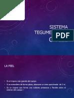 Sistema Tegumentario. Presentacion