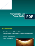 Aula 1 - Embriologia - Gametogênese e Fecundação