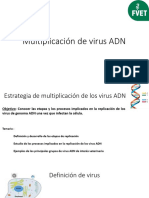 Multiplicación de Virus ADN