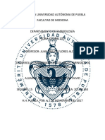 ENSAYO ARCOS FARINGEOS