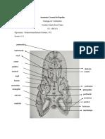 Anatomía Craneal de Reptiles