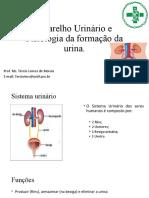 Aula 1 - Sistema urinário e fisiologia
