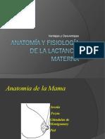 Anatomía y Fisiología de la Lactancia Materna