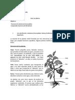 Guía Las Plantas