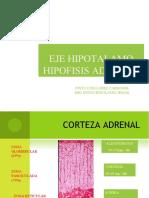 Eje Hipotalamo Hipofisis Adrenal Sistema Renina Angiotensina Aldosterona