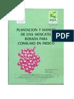 Plantacion y Manejo de Uva Moscatel