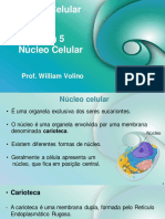 Aula 5 - Nucleo celular