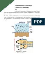 Procesos Sedimentarios y Estratigraficos CLASE 4