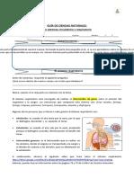 GUIA SISTEMAS Respiratorio