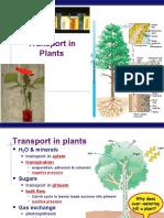 AP Bio Plant Transport(KFogler)