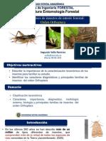 C10. Órdenes de insectos de interés forestal- Orden Orthoptera