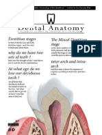 Dental Anatomy - Lecture 2