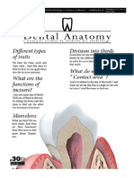 Dental Anatomy - Lecture 4