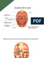 Tratamiento de paralisis facial