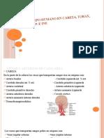 DIVISION DEL CUERPO HUMANO (venas y arterias)