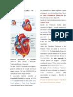 Sistema Cardiovascular03 - Fisiologia