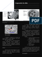 Citoplasma- organelas