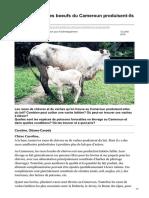 lavoixdupaysan.net-Les chèvres et les boeufs du Cameroun produisent-ils assez de lait