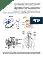 O-Sistema-Nervoso
