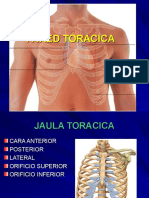 TEMA 1 - CAJA TORACICA Y COLUMNA