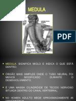 Lesão Medular Clínica Neurológica