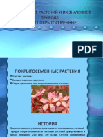 МНОГООБАЗИЕ РАСТЕНИЙ И ИХ ЗНАЧЕНИЕ В ПРИРОДЕ Кузнецов Денис