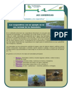 Boletin Verde Cooperativo04