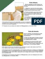 Tarea de Fotografia (Foto Urbana & Foto Insecto)