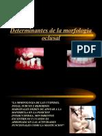 Deteminantes de La Morfologia Oclusal