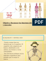 ppt huesos y musculos 3-4