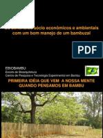 Os benefícios sócio econômicos e ambientais com um bom manejo de um bambuzal