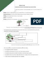 ATIVIDADE PLANTAS 2º ANO