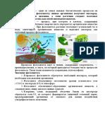 06.12.2020 ФОтосинтез