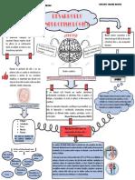 Desarrollo neurofisiologia