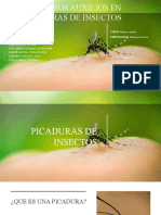 Exposicion Picadura de Insectos (1)