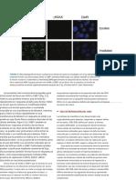 Radiobiology book[001-556][026-031].en.es